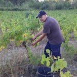 beaumes de venise bio beauvalcinte